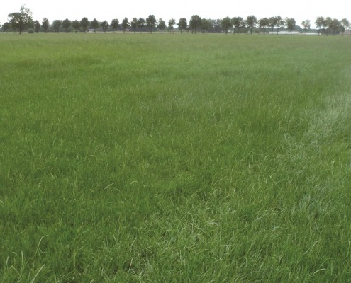 Government Regulated Grasslands Survey - Land Survey, Boundary Survey